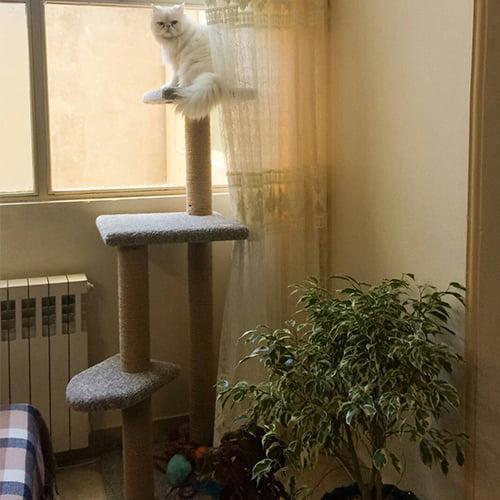 اسکرچر-پیشو - اسکر چر و درخت گربه ایرانی