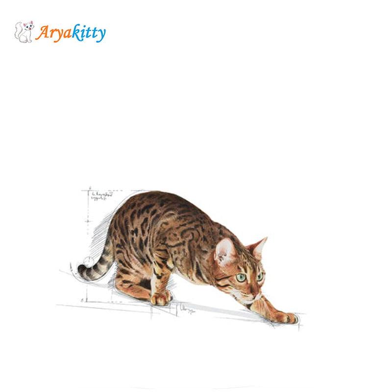 خشک گربه های بالغ خارج از خانه 1 - غذای خشک گربه های بالغ خارج از خانه