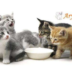 بچه گربه 300x300 - گربه