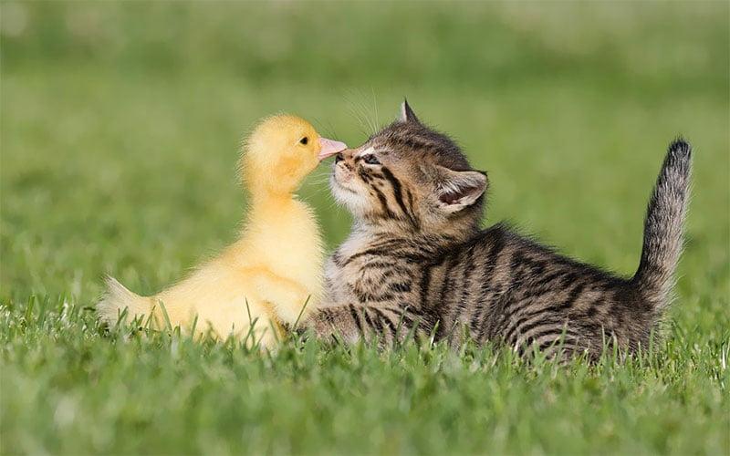 های خیابانی 2 - گربه های خیابانی