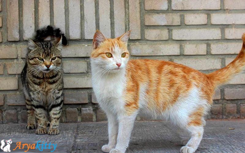 گربه های خیابانی 3