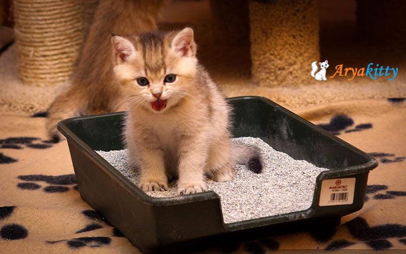 گربه های خیابانی 4