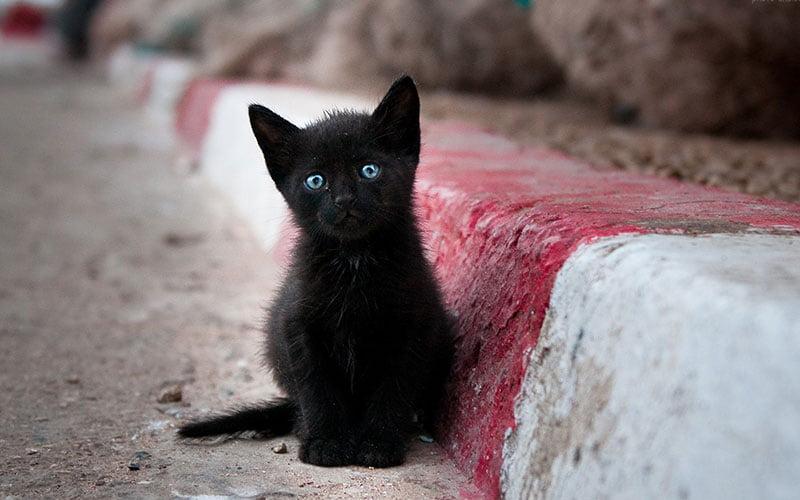 های خیابانی - گربه های خیابانی