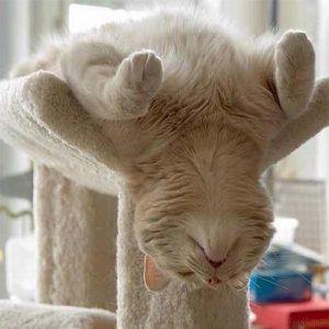 اسکرچر و درخت گربه