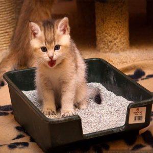 خاک گربه 300x300 - گربه
