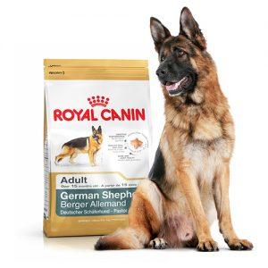 خشک سگ نژاد ژرمن شپرد بالای 15 ماه 1 300x300 - سگ