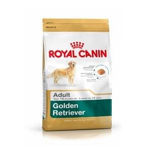 خشک سگ نژاد گلدن رتریور بالای ۱۵ ماه 300x300 - پت شاپ اینترنتی آریاکیتی