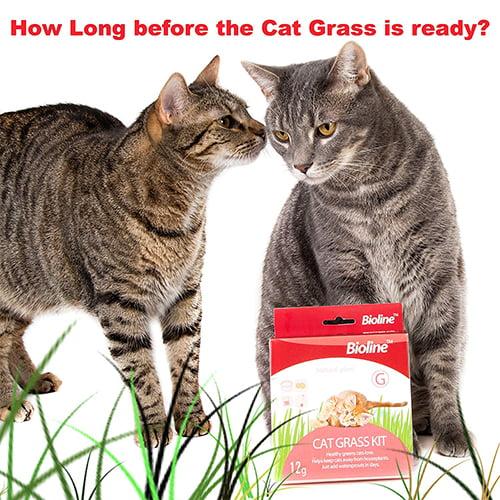 علف گربه بایولاین1 - کیت علف گربه بایولاین
