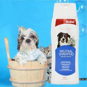 شامپو آنتی باکتریال مخصوص سگ Bioline 1