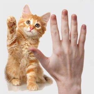 آموزش و تربیت گربه 300x300 - گربه